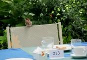 hotel-pensione-lago-di-garda-parco-17.jpg